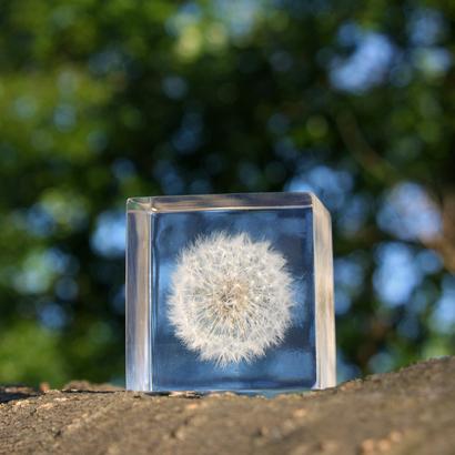 Sola cube タンポポ(2121さま).JPG